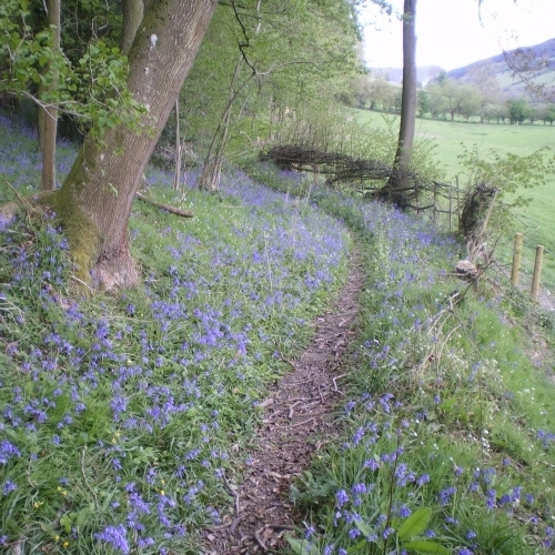 Spring in Shropshire near Self-Catering Cottage Lets